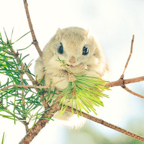 ほのぼのする野生の動物たちの画像の数々!の画像(4枚目)