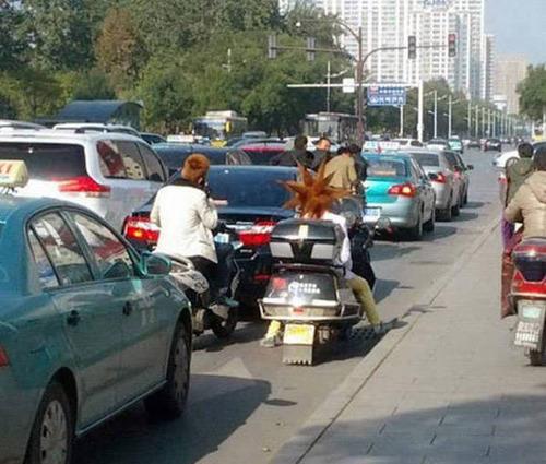 もはや職人技!?自動車やバイクで凄いものを運んでる画像の数々!!の画像(8枚目)