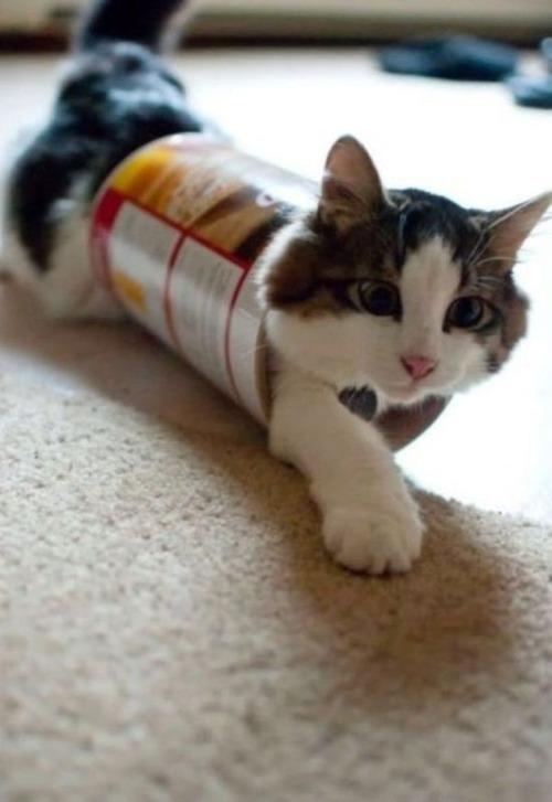 なぜ猫は狭いところが好きなのか??挟まっている猫の画像の数々wwwの画像(12枚目)