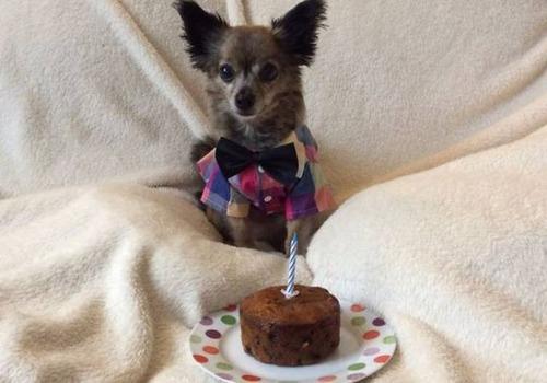 動物達の誕生日の写真の数々!!の画像(23枚目)