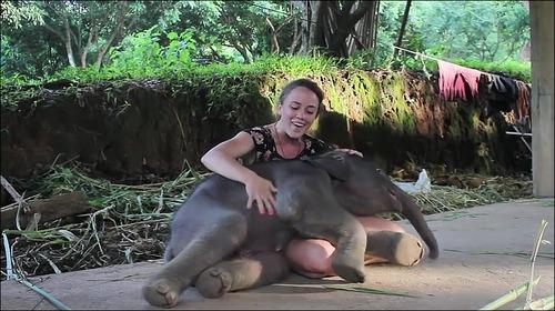 【動画】子供のゾウに懐かれると嬉しい_000013402