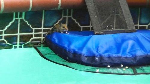 プールに落ちた動物を救うアイテムの画像(6枚目)