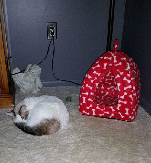 にゃんとも言えない、ちょっと困った猫の画像の数々!!の画像(24枚目)