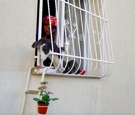 猫ちゃん用の階段の画像(5枚目)