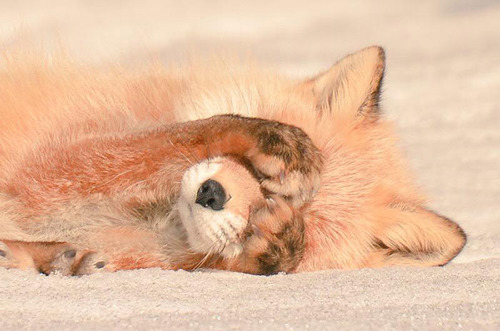 ほのぼのする野生の動物たちの画像の数々!の画像(14枚目)