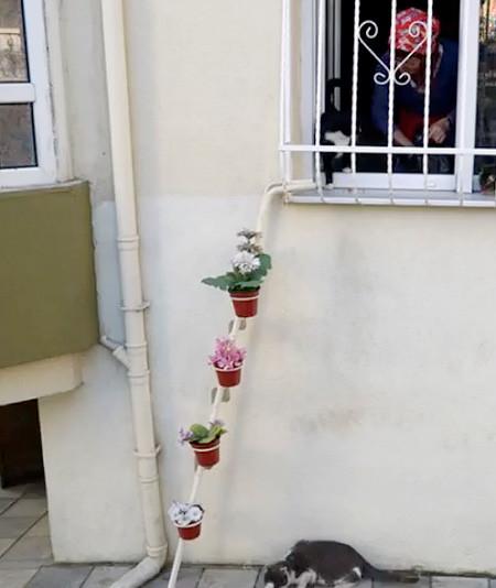 猫ちゃん用の階段の画像(2枚目)
