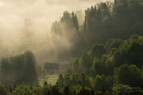森の中の隠れ家の画像(40枚目)