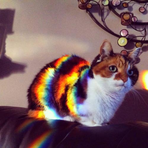 神々しい猫の画像(5枚目)