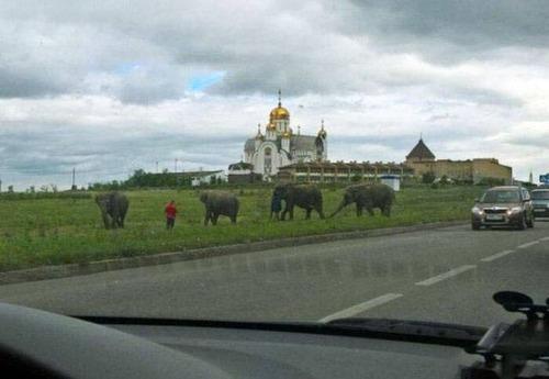 ロシアの日常の画像(26枚目)