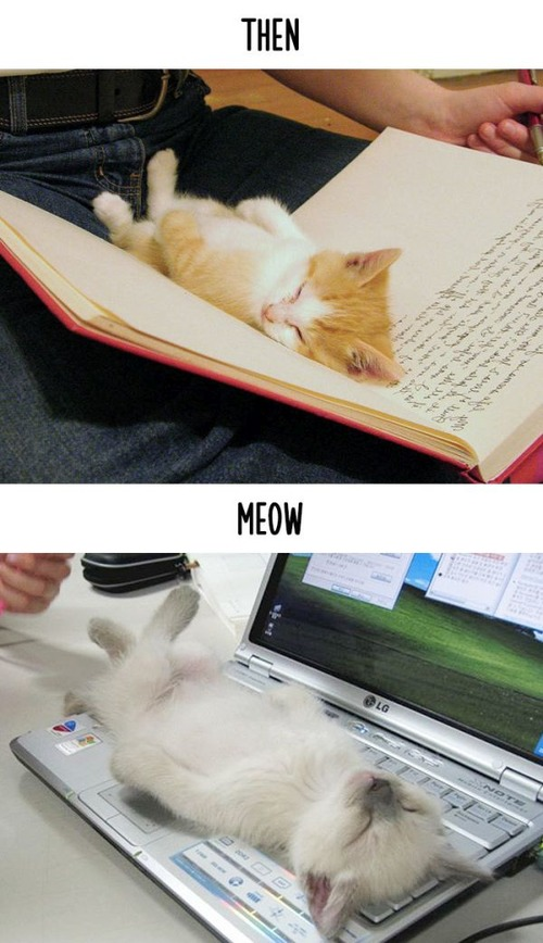 テクノロジーの進化がネコ達に与えた影響の比較画像の数々!!の画像(15枚目)