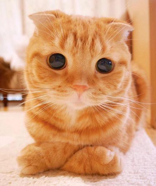 かわい過ぎる猫ちゃんの画像(29枚目)