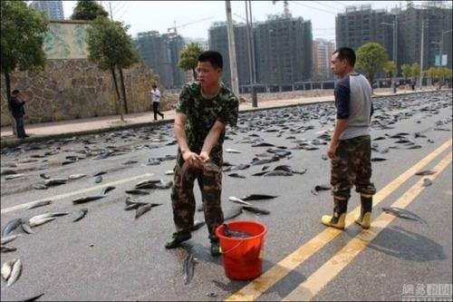事故で魚がいっぱい落ちたの画像4