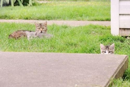 獲物を狙うかわいいネコの画像(7枚目)