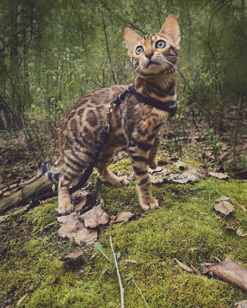 美しい風景と猫の画像(34枚目)