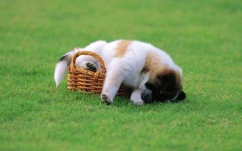 子犬が眠っているの画像(7枚目)