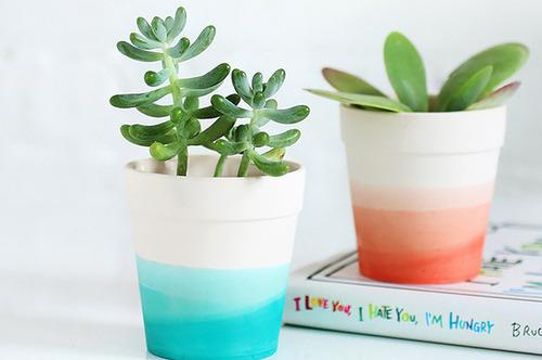 【画像】狭くても大丈夫!小さな植木が綺麗に飾れる工夫の数々!の画像(1枚目)
