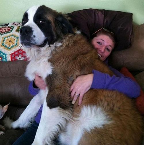 犬は可愛いけど、かなりジャマな感じの犬の画像の数々!!の画像(8枚目)