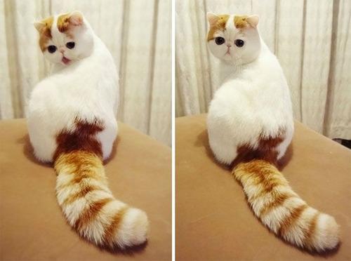 かわい過ぎる猫ちゃんの画像(26枚目)