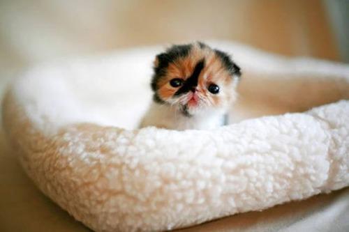 kittens_14