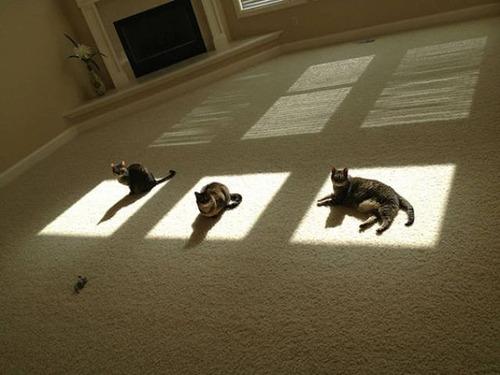 神々しい猫の画像(30枚目)