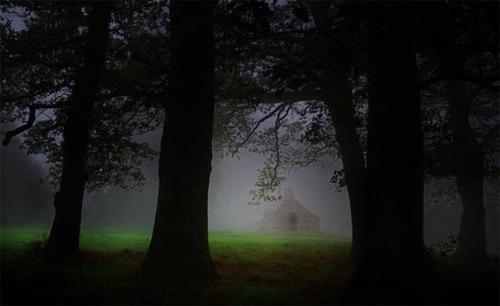 森の中の隠れ家の画像(38枚目)