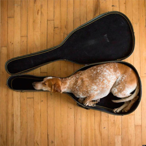 どこでも寝れる!?どこでも寝てる可愛い犬の画像の数々!!の画像(9枚目)