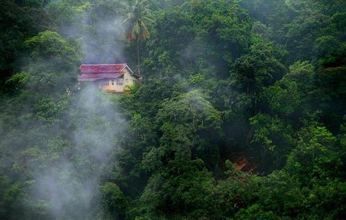 森の中の隠れ家の画像(30枚目)