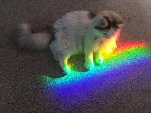 神々しい猫の画像(46枚目)