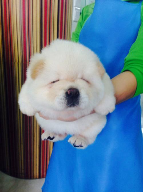 かわい過ぎる子犬の画像の数々!の画像(53枚目)