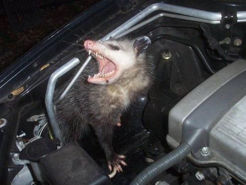 自動車の中に潜んでいる動物達の画像(7枚目)