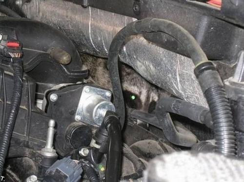 自動車の中に潜んでいる動物達の画像(6枚目)
