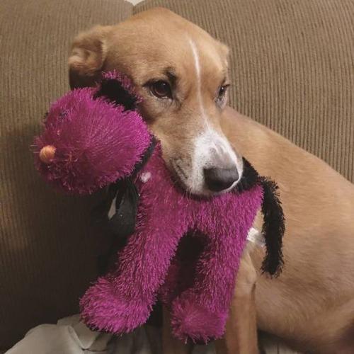 怯えてる犬の画像(37枚目)