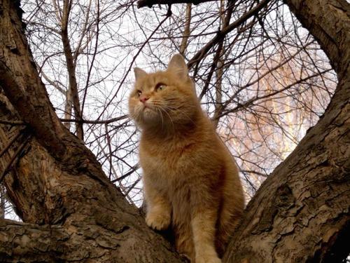 獲物を狙うかわいいネコの画像(16枚目)