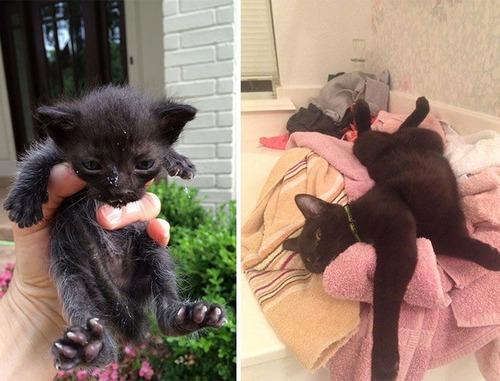 【画像】子汚い野良猫を拾って育てたら、こんなに可愛いニャンコになりましたよ!の画像(13枚目)