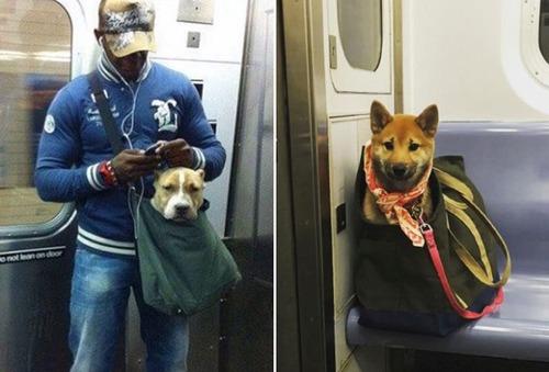 カバンに入れられた犬の画像(6枚目)