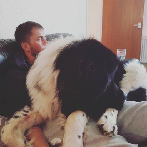 巨大な犬の画像(2枚目)