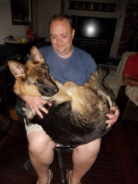 巨大な犬の画像(4枚目)