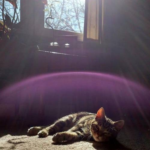 神々しい猫の画像(13枚目)