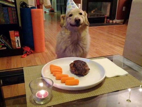 動物達の誕生日の写真の数々!!の画像(30枚目)