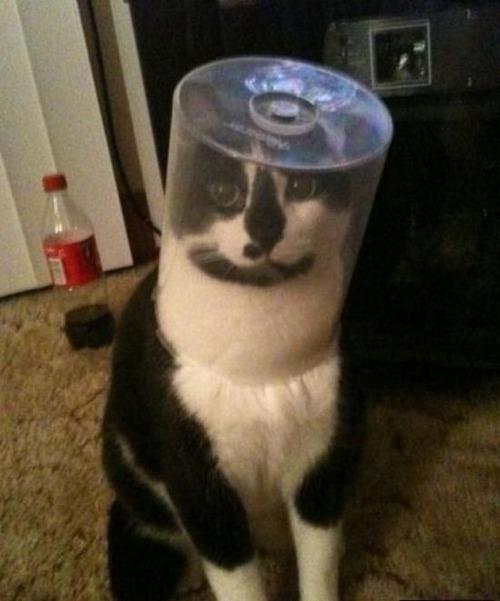 なぜ猫は狭いところが好きなのか??挟まっている猫の画像の数々wwwの画像(4枚目)