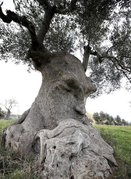 不気味な形の樹木の画像(23枚目)
