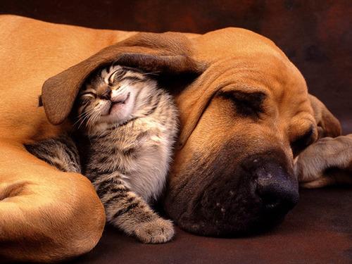 ほのぼのする!仲の良い犬と猫の画像の数々!!の画像(1枚目)