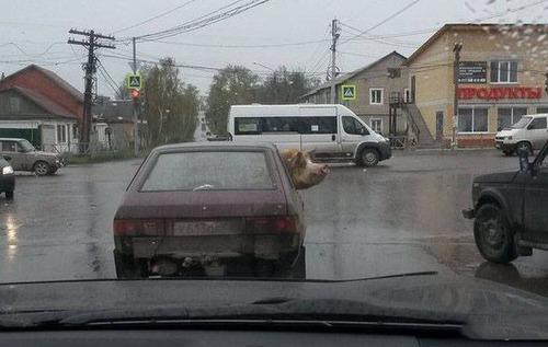 ロシアの日常の画像(15枚目)