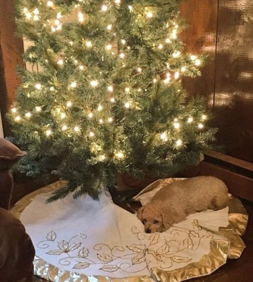 犬とクリスマスの画像(15枚目)