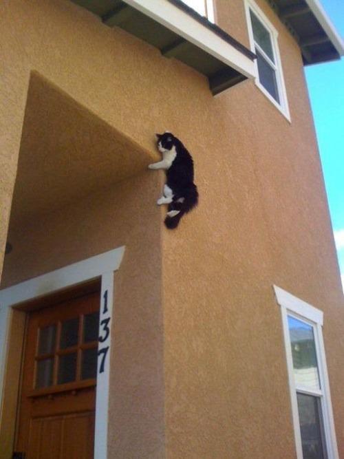 獲物を狙うかわいいネコの画像(18枚目)