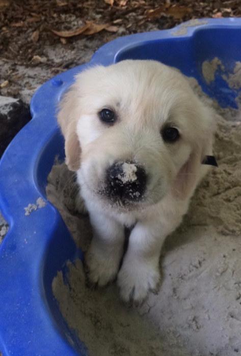 かわい過ぎる子犬の画像の数々!の画像(40枚目)