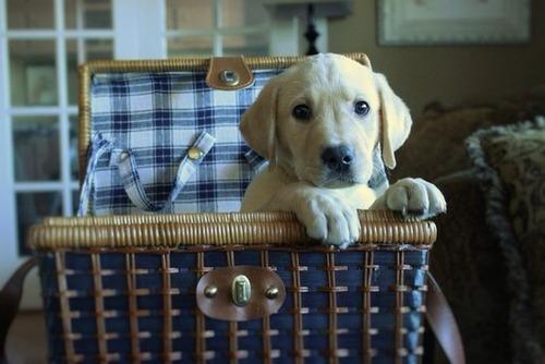 かわい過ぎる子犬の画像の数々!の画像(77枚目)