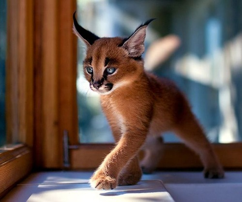 かわい過ぎる猫ちゃんの画像(23枚目)