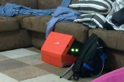 獲物を狙うかわいいネコの画像(11枚目)