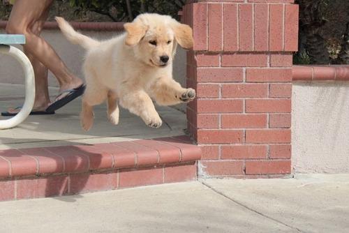 かわい過ぎる子犬の画像の数々!の画像(66枚目)